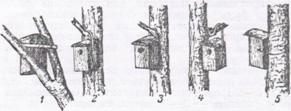 Способы развешивания гнездовий