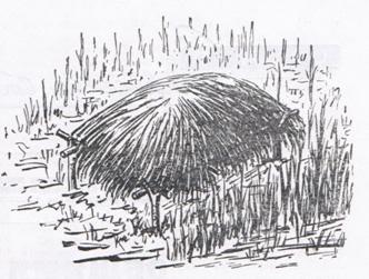 Гнездовой шалаш из осоки для уток (по В.Немцову)